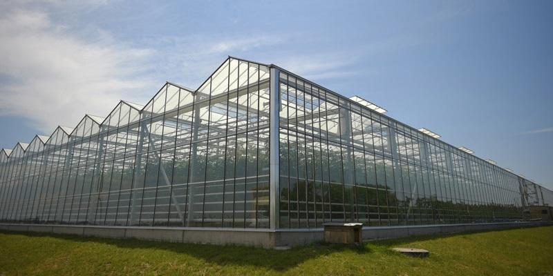 Здоровые амбиции: «МИнБанк» запустит в Воронежской области тепличный проект и роботизированную молочно-товарную ферму