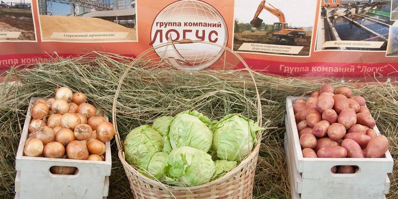 Уйти в переработку: ГК «Логус» продаст часть своих активов под Воронежем