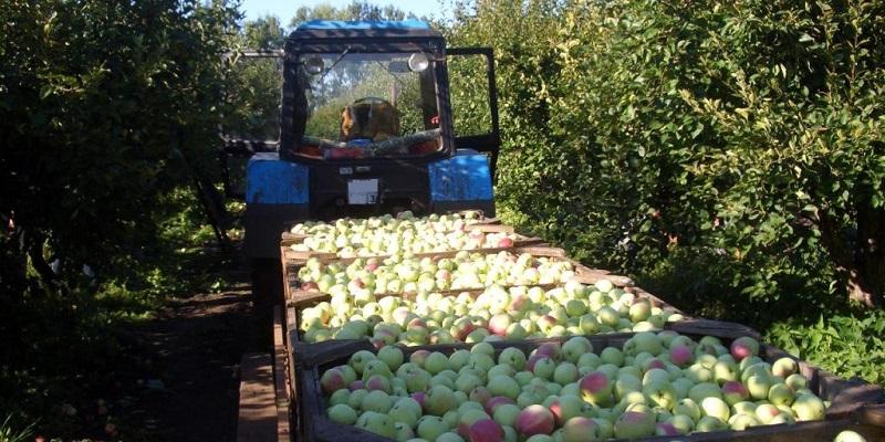 Настраховали: Плодово-ягодную компанию под Воронежем подозревают в мошенничестве более чем на 200 млн