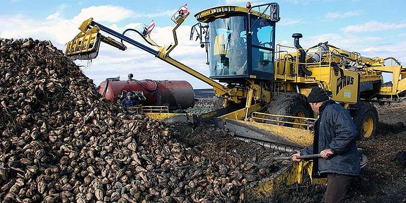 Чтобы слиплось: В Воронежской области началась уборка сахарной свеклы