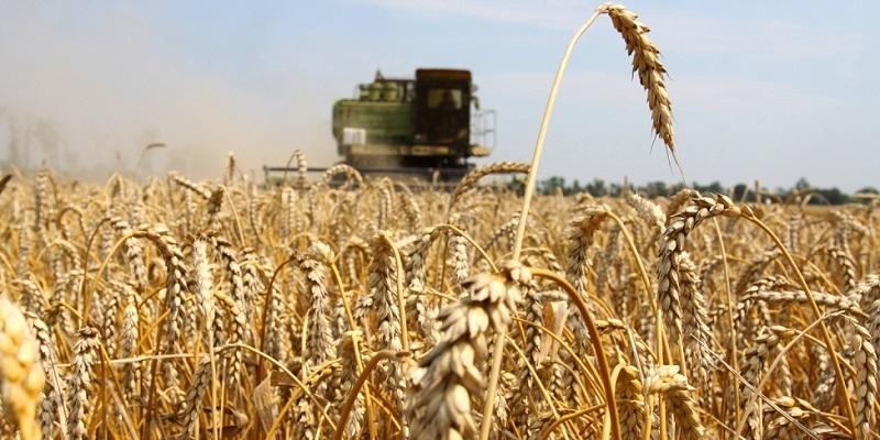 Молотили – и продолжим!: Воронежские аграрии собрали уже 3 млн тонн зерна