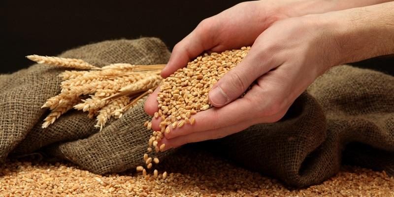 Где деньги, Зин?: В Воронежской области планируют создать зерновой терминал за 5 млрд руб.