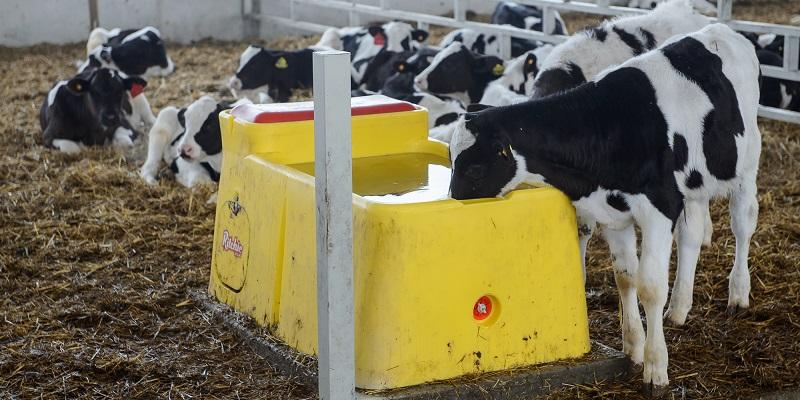 Мычащий «суррогат»: Гордееву, Патрушеву и Гусеву показали под Воронежем, как делать мраморную говядину из молочных пород скота