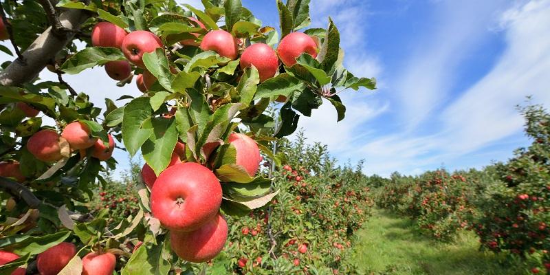 Яблоки раздора: Страховщики заподозрили плодово-ягодную компанию под Воронежем в подделке подписей