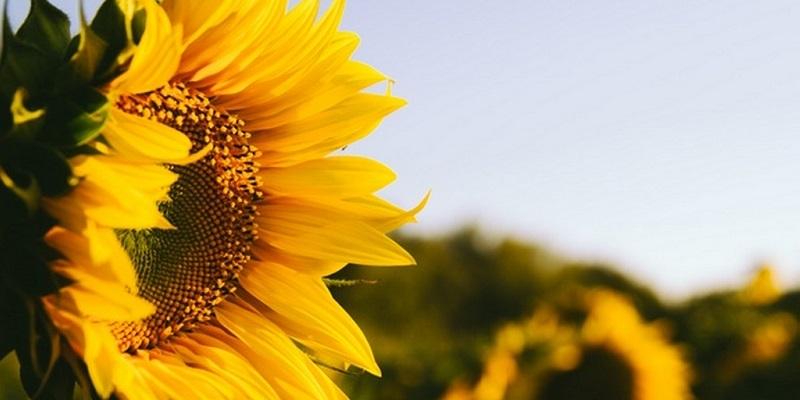 Компания из Франции планирует производить в Воронежской области элитные семена