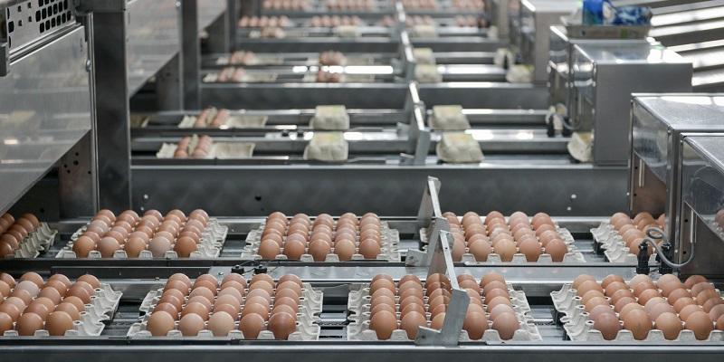 В Воронежской области могут открыть три птицефабрики на 600 млн яиц