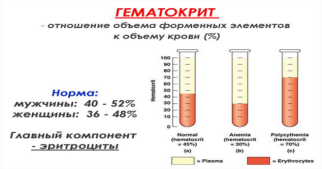 Гематокрит в крови